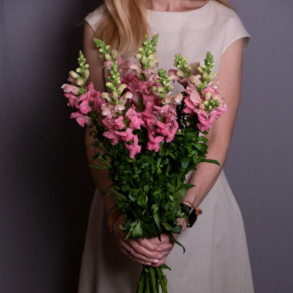 Антирринум нежно-розовый или Львиный зев