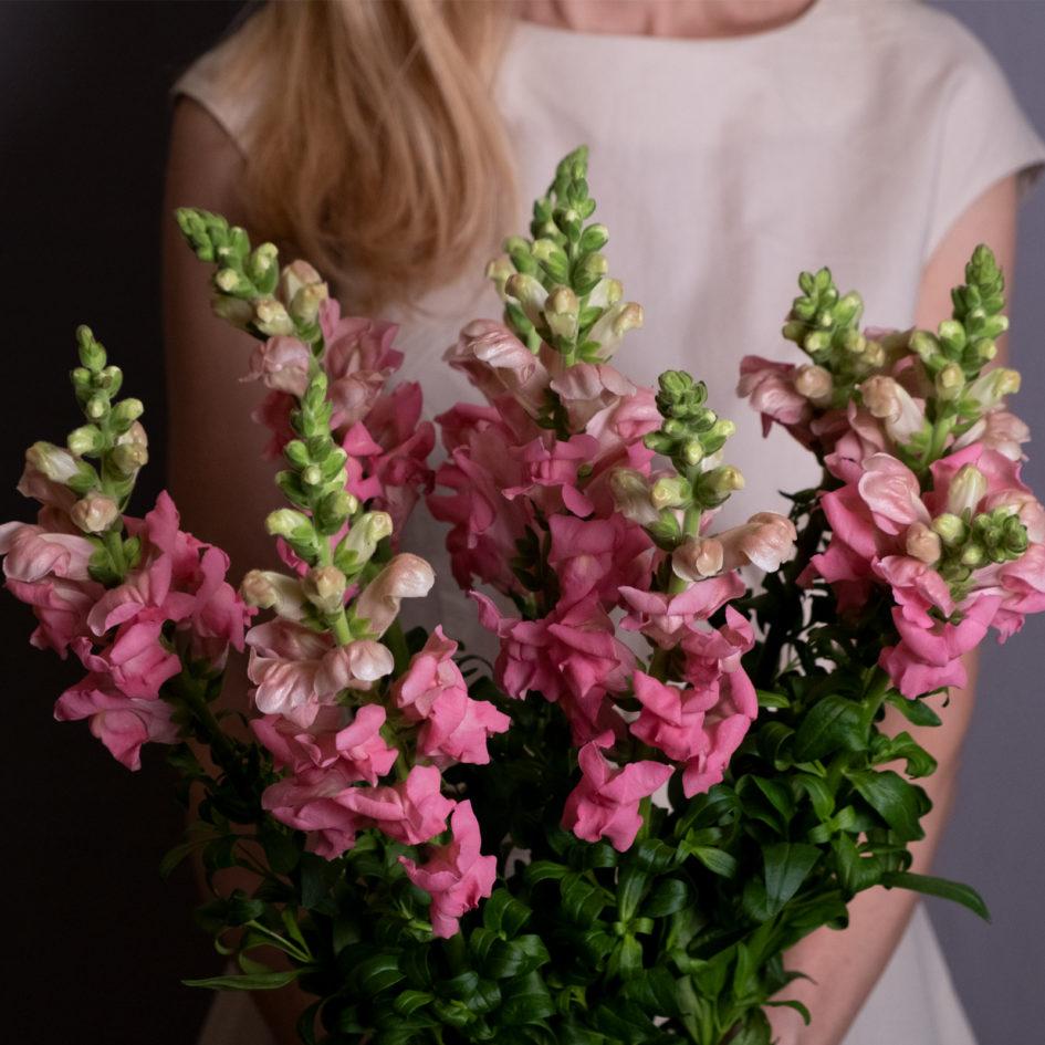 Антирринум нежно-розовый доставка по городу