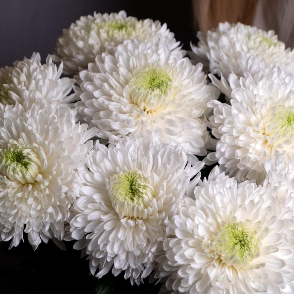 Букет из белой хризантемы с доставкой по Челябинску
