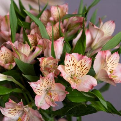Розовая альстромерия для дома